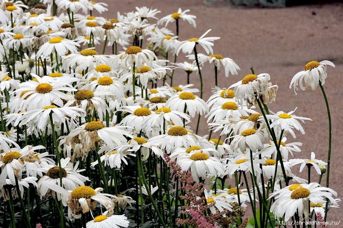 ботанический сад 2015 (140) (700x466, 368Kb)