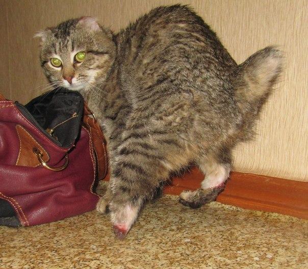 Вася котов пропал