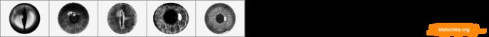 ID0543 (700x52, 20Kb)
