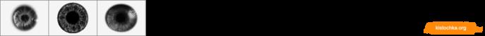 ID0546 (700x52, 13Kb)