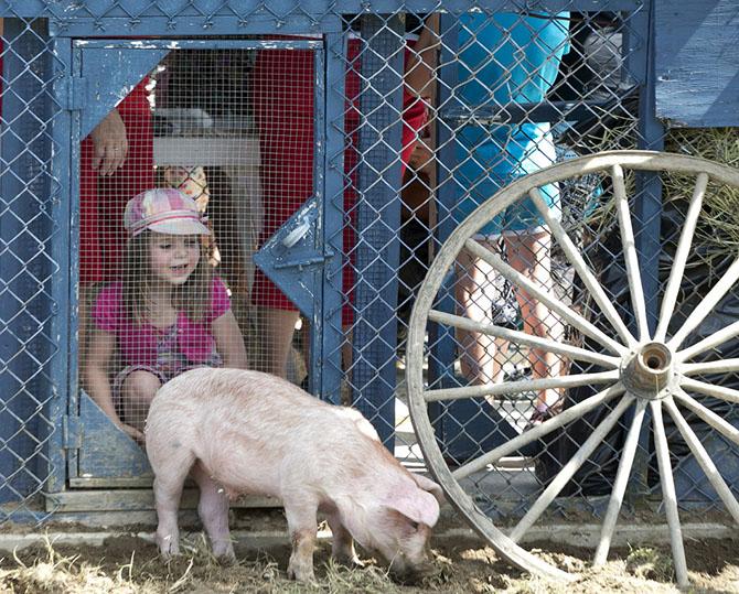 фестиваль Du Cochon в канаде 2 (670x539, 452Kb)