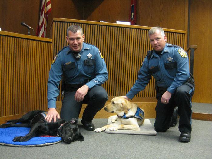собаки работают в суде Courthouse Dogs 1 (700x525, 352Kb)