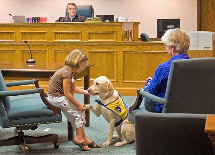 собаки работают в суде Courthouse Dogs 2 (700x505, 229Kb)