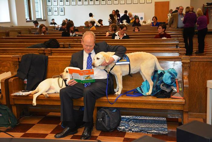 собаки работают в суде Courthouse Dogs 6 (700x467, 330Kb)