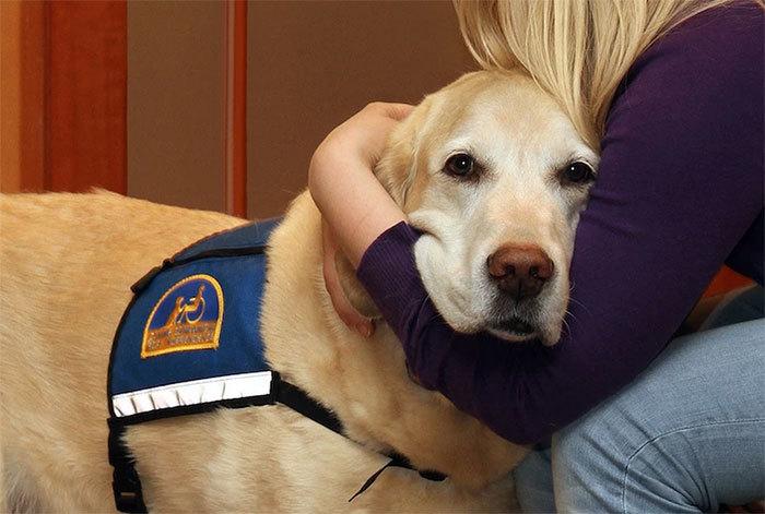 собаки работают в суде Courthouse Dogs 8 (700x471, 189Kb)