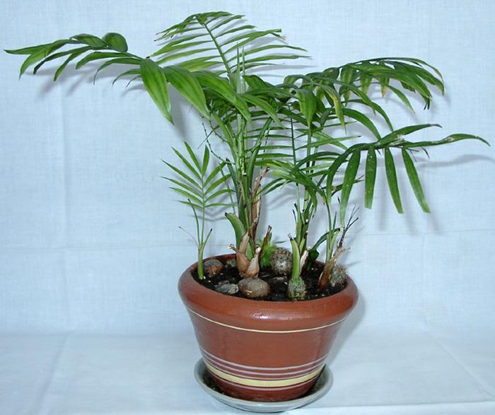 Бисероплетение пальма схемы - Делаем фенечки своими руками.