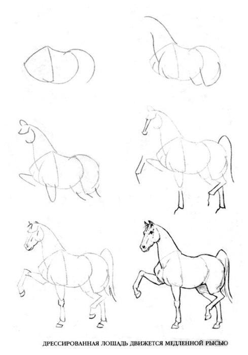 Учимся рисовать лошадей.