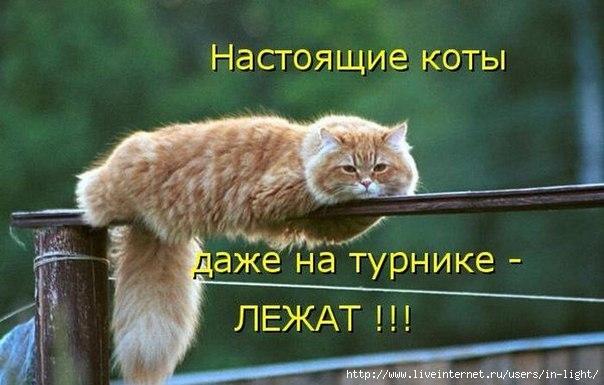20121107175040 (604x385, 42Kb)