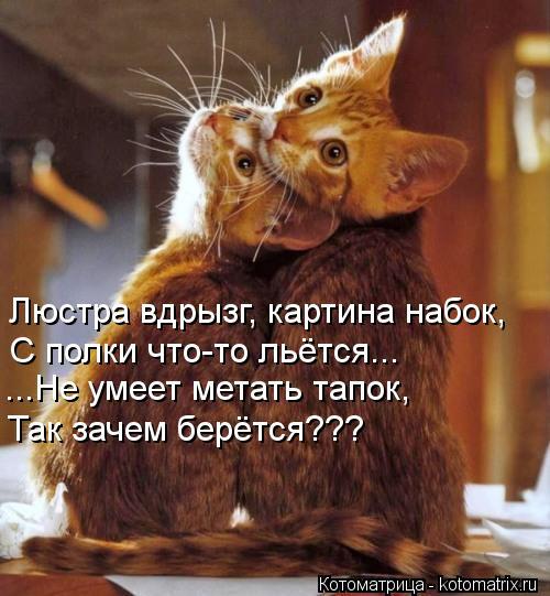 kotomatritsa_DC (500x541, 50Kb)