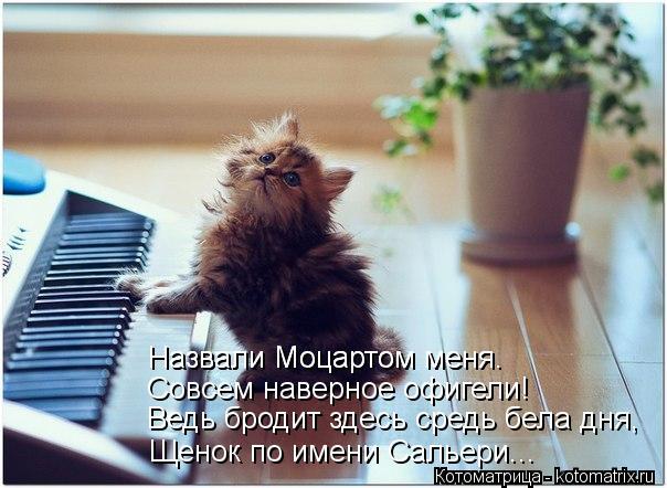 kotomatritsa_JL (604x442, 52Kb)