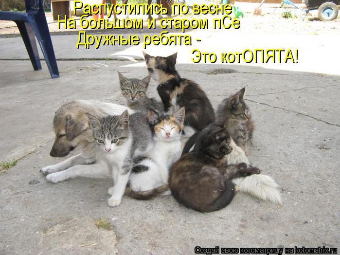 kotomatritsa_PQ (700x524, 70Kb)