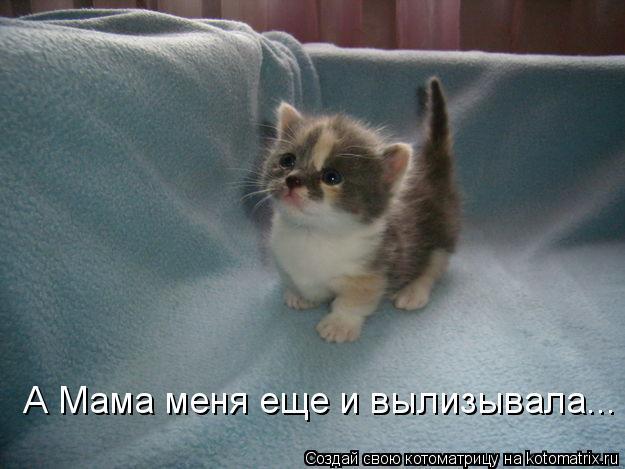 kotomatritsa_SH (625x469, 44Kb)