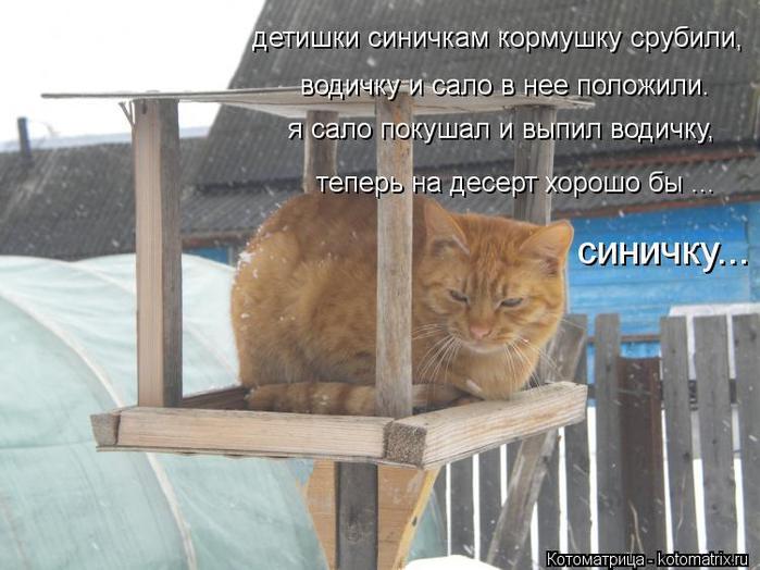 kotomatritsa_uV (700x524, 55Kb)
