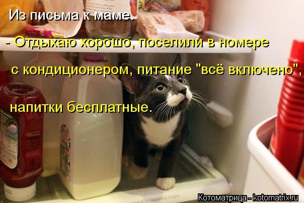 kotomatritsa_Z5 (604x403, 51Kb)