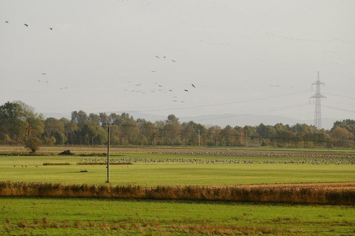 Германия, окрестности болота Реденер Мур, Rehdener Geestmoor. 64545