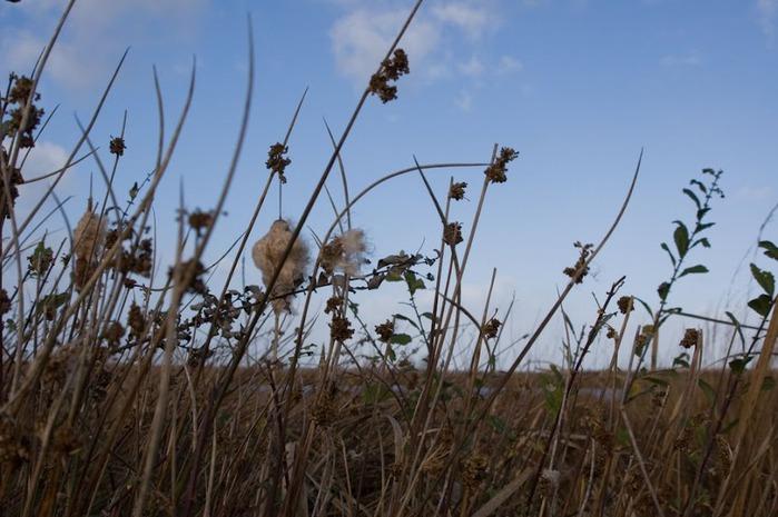 Германия, окрестности болота Реденер Мур, Rehdener Geestmoor. 42928
