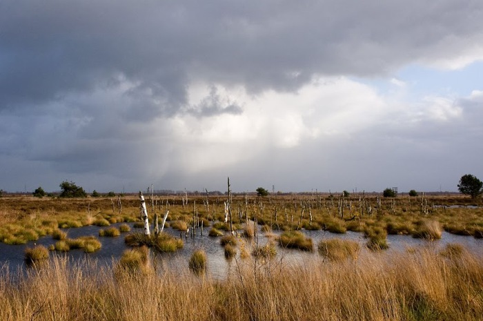 Германия, окрестности болота Реденер Мур, Rehdener Geestmoor. 97566