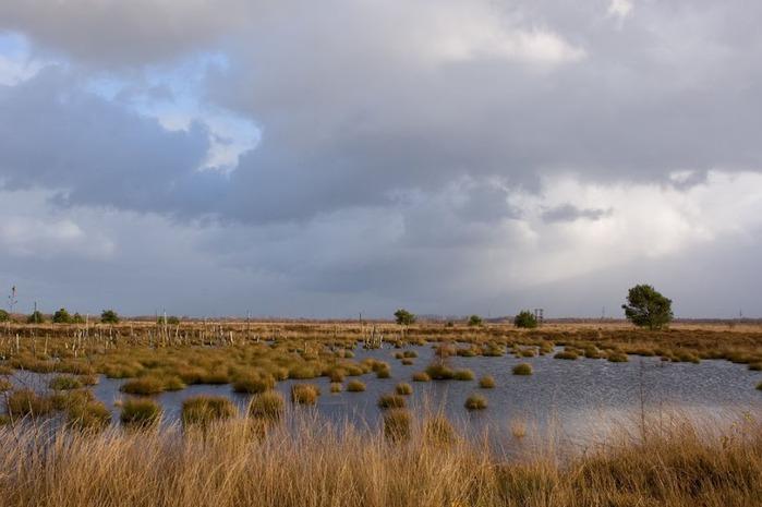 Германия, окрестности болота Реденер Мур, Rehdener Geestmoor. 16591