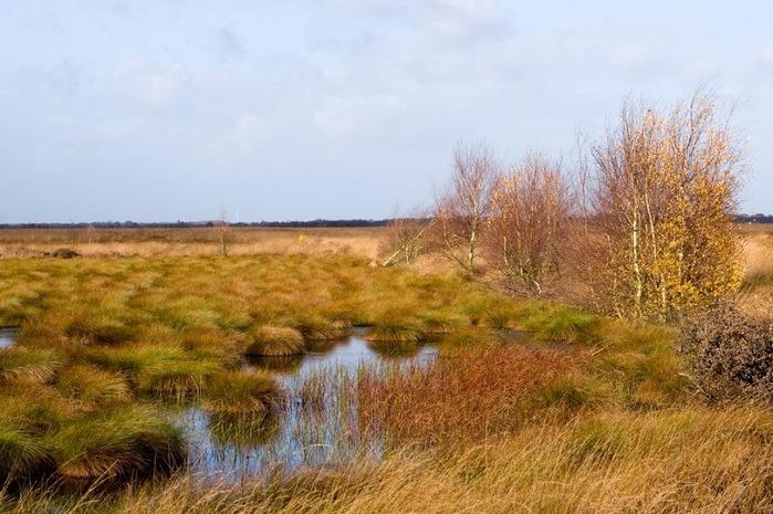 Германия, окрестности болота Реденер Мур, Rehdener Geestmoor. 70624