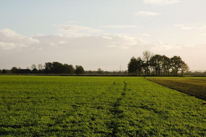 Германия, окрестности болота Реденер Мур, Rehdener Geestmoor. 72701