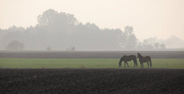 Германия, окрестности болота Реденер Мур, Rehdener Geestmoor. 80583