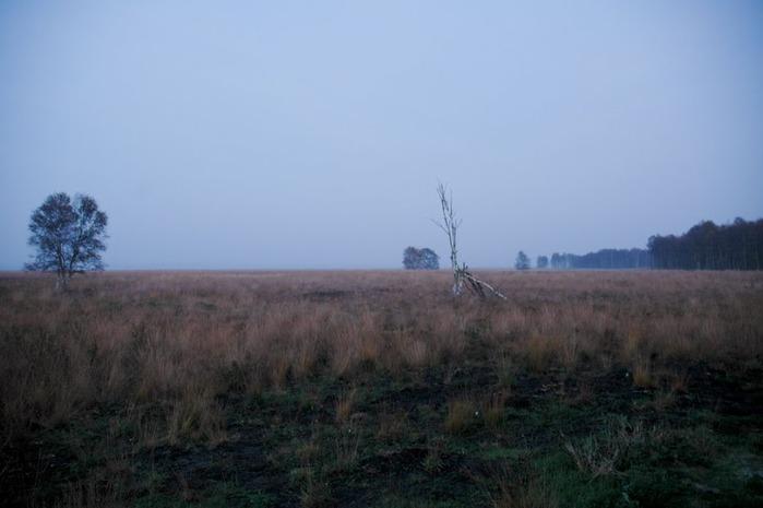 Германия, окрестности болота Реденер Мур, Rehdener Geestmoor. 19210
