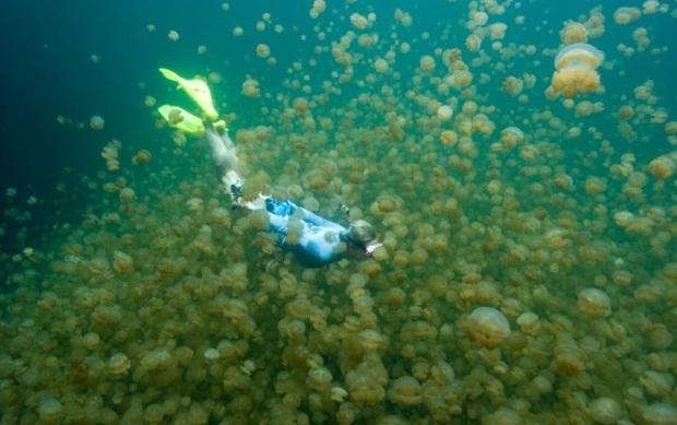 Palau-JelleyfishLake-Daira__M0013475-620x465 (620x389, 79Kb)