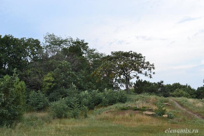 холм в парке/4348076_holmvparke (700x466, 108Kb)
