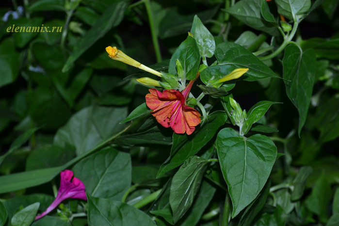 цветы макро/4348076_cvetimakro (700x466, 100Kb)