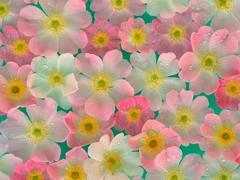flowers (468x351, 52Kb)