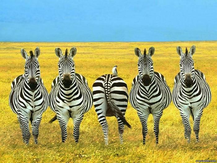 интересное о животных/3185107_interesnie_fakti_o_jivotnih (700x525, 82Kb)