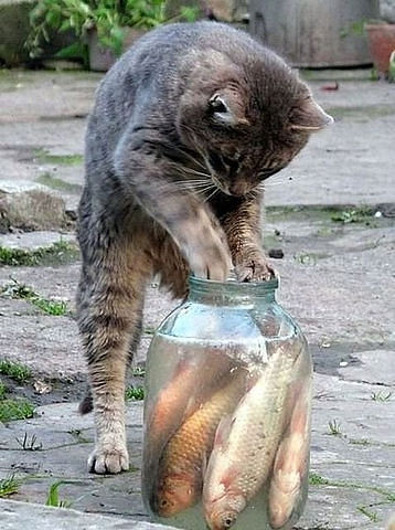 Funny cats cat fishing for Fish videos for cats