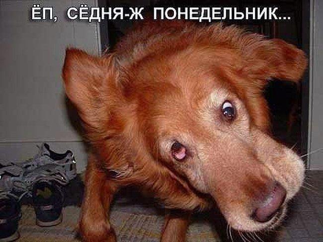 собака (650x488, 63Kb)