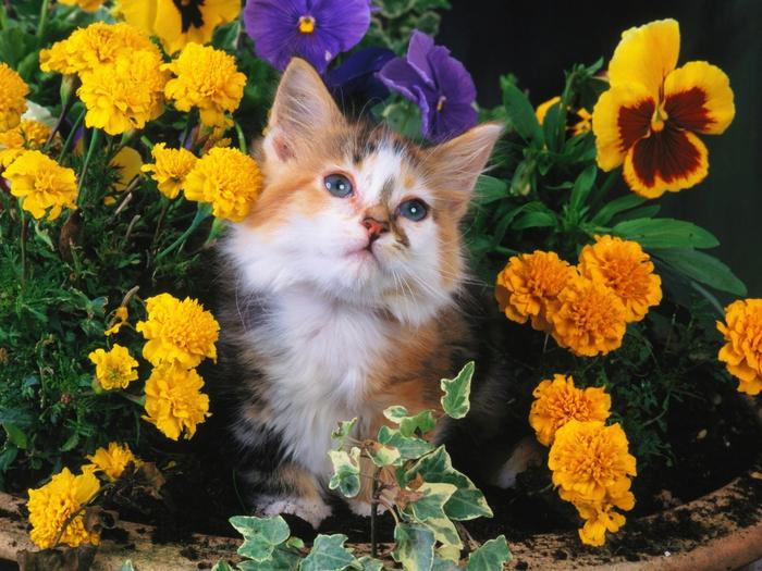 Котик с цветами картинки 8