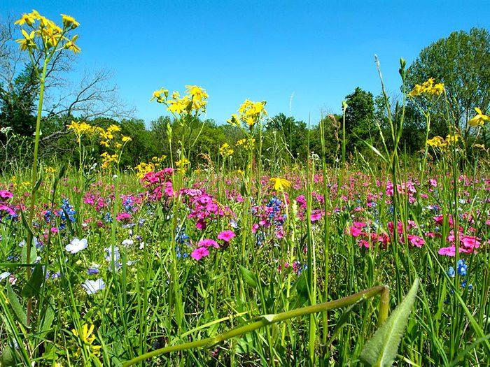 полевые цветы (700x525, 149Kb)