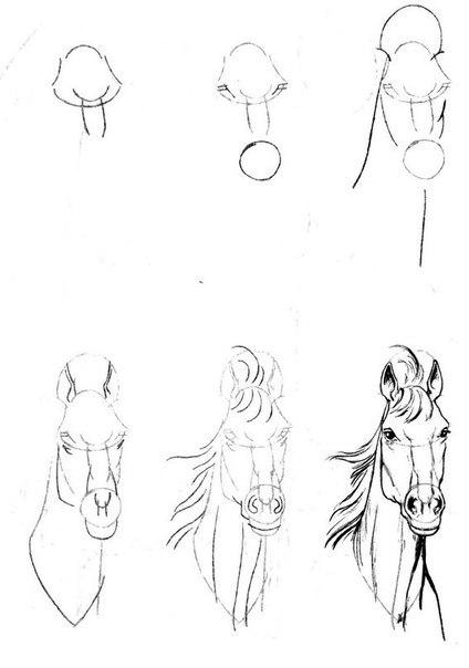 Рисуем лошадок (1) (424x604, 31Kb)
