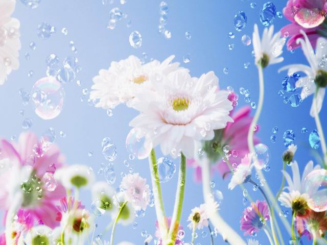 flower (640x480, 42Kb)