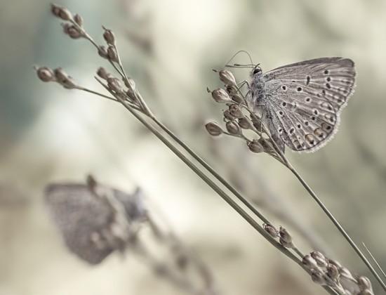 красивые нежные фото 1 (550x420, 40Kb)
