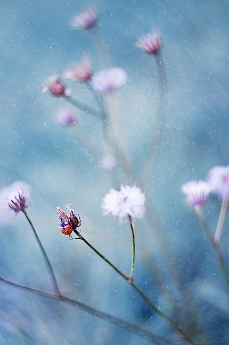 красивые нежные фото 12 (465x700, 205Kb)