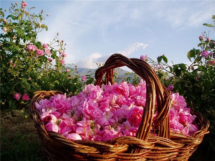 Долина Роз в Болгарии 2 (700x525, 123Kb)