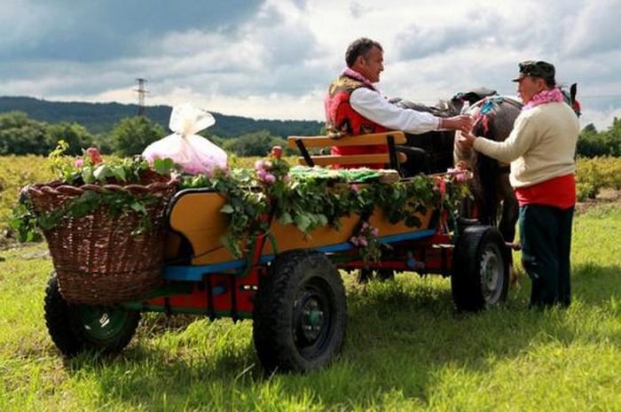 Долина Роз в Болгарии 10 (700x465, 91Kb)