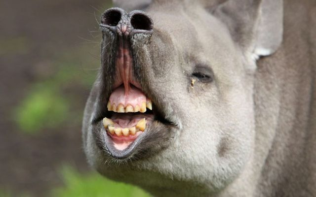 these_funny_animals_640_41 (640x400, 31Kb)