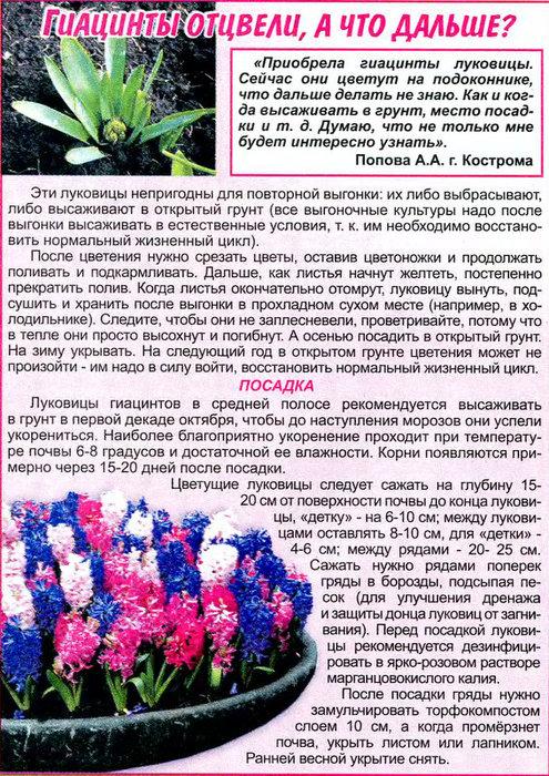 1000 Sovetov.2009'05 (174) (495x700, 188Kb)