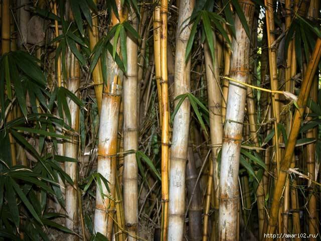 1-bambuk-v-interere (640x480, 188Kb)