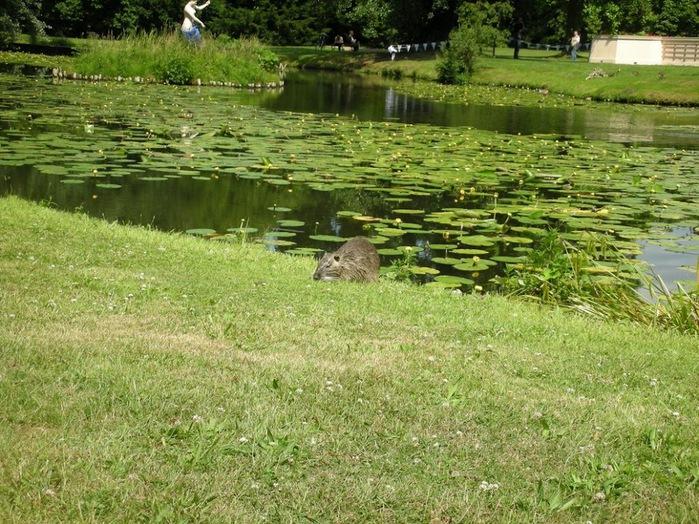 Парк и замок Браниц 25655