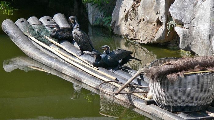 китайская рыбалка с бакланами 5 (700x393, 146Kb)