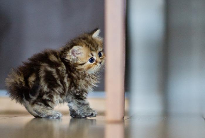 смешные котята фото 1 (699x473, 64Kb)