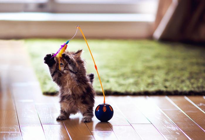 смешные котята фото 3 (699x477, 71Kb)
