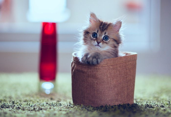 смешные котята фото 5 (699x476, 71Kb)