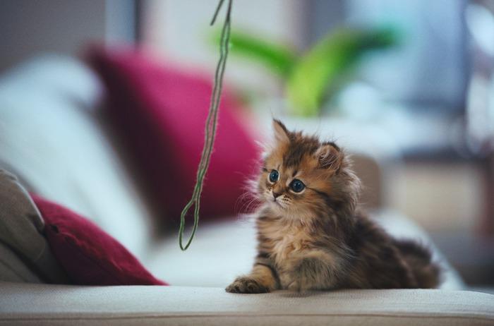 смешные котята фото 7 (700x462, 57Kb)